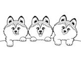 <span class='hidden-xs'>Coloriage de </span>3 chiots à colorier