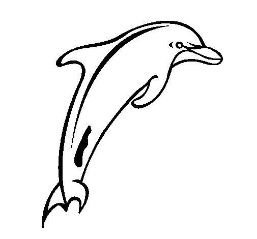 Coloriage de Adulte dauphin pour Colorier