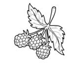 <span class='hidden-xs'>Coloriage de </span>Branche framboises à colorier