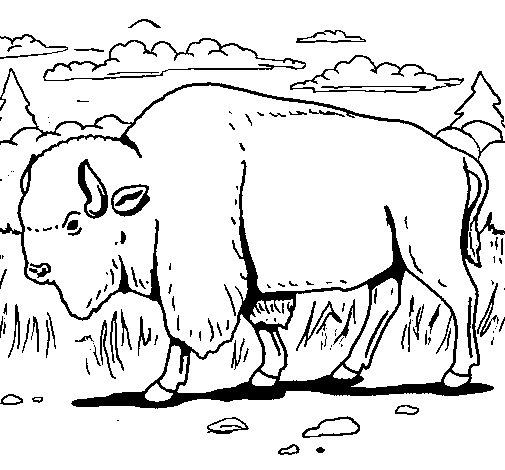 Coloriage de Buffalo pour Colorier