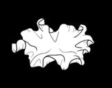 <span class='hidden-xs'>Coloriage de </span>Champignon kikurage à colorier