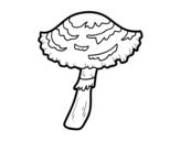 <span class='hidden-xs'>Coloriage de </span>Champignon lepiota cristata à colorier