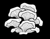 <span class='hidden-xs'>Coloriage de </span>Champignon pleurotus à colorier