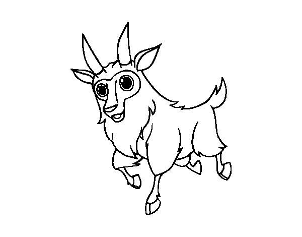 Coloriage de Chèvre mâle pour Colorier