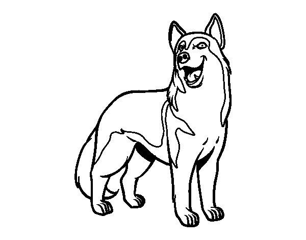 Coloriage de Chien-loup pour Colorier