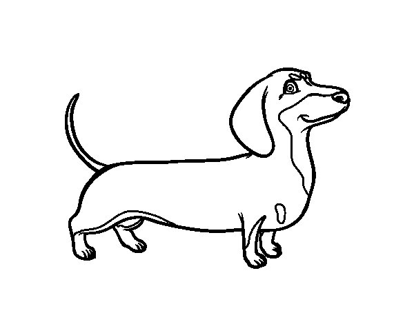Coloriage de chien teckel pour colorier - Dessin teckel ...