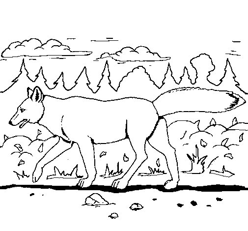 Coloriage de coyote pour colorier - Dessin de coyote ...