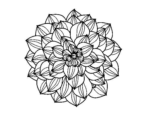 coloriage de dahlia pour colorier - coloritou