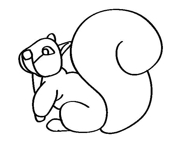 Coloriage de Écureuil avec une grande queue pour Colorier