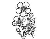 <span class='hidden-xs'>Coloriage de </span>Fleur bouton d'or à colorier