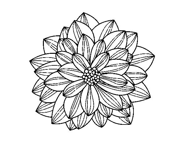 coloriage de fleur dahlia pour colorier - coloritou
