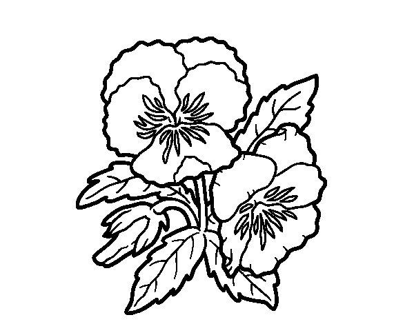Coloriage de Fleur de pensée pour Colorier