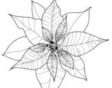 <span class='hidden-xs'>Coloriage de </span>Fleur en poinsettia à colorier