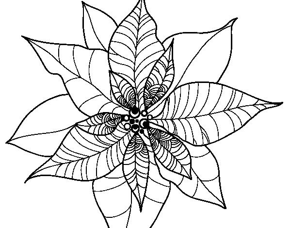 Coloriage de fleur en poinsettia pour colorier - Fleur en coloriage ...