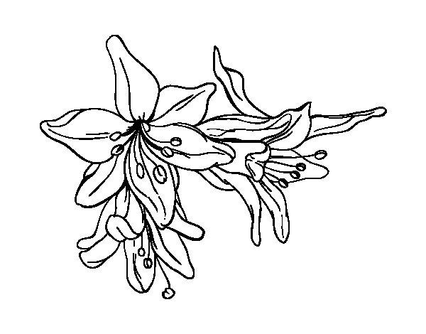 Coloriage de Fleurs de lys pour Colorier