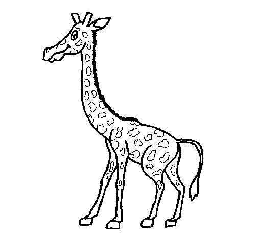Coloriage de Girafe 1 pour Colorier