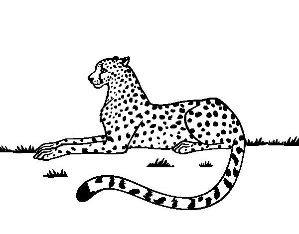 Coloriage de Guépard reposant pour Colorier