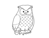 <span class='hidden-xs'>Coloriage de </span>Hibou adulte à colorier
