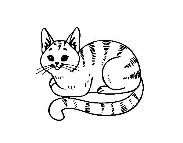 Coloriage de Jeune chat pour Colorier