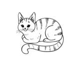 <span class='hidden-xs'>Coloriage de </span>Jeune chat à colorier