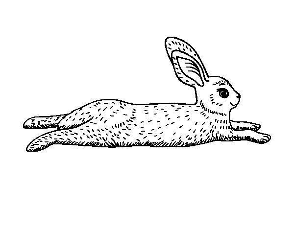 Coloriage de Le lièvre pour Colorier