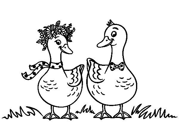 Coloriage de Paire de canards pour Colorier