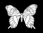Dibujo de Papillon sauvage
