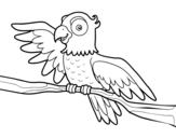 <span class='hidden-xs'>Coloriage de </span>Perroquet en liberté à colorier