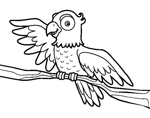 Coloriage de perroquet en libert pour colorier - Perroquet en dessin ...