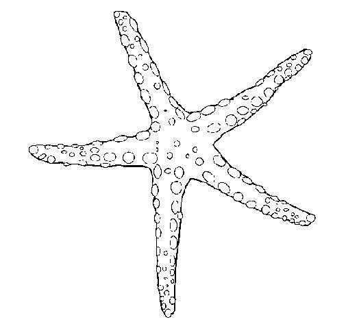 Coloriage de Petite étoile de mer pour Colorier