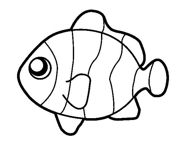 Coloriage de poisson clown pour colorier for Disegno pagliaccio da colorare