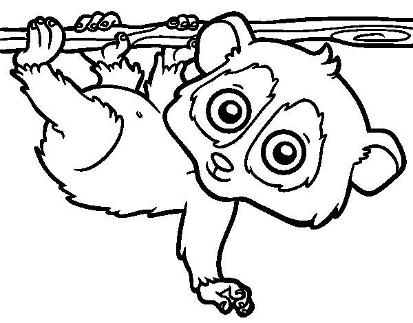 Coloriage de Pygmée loris  pour Colorier