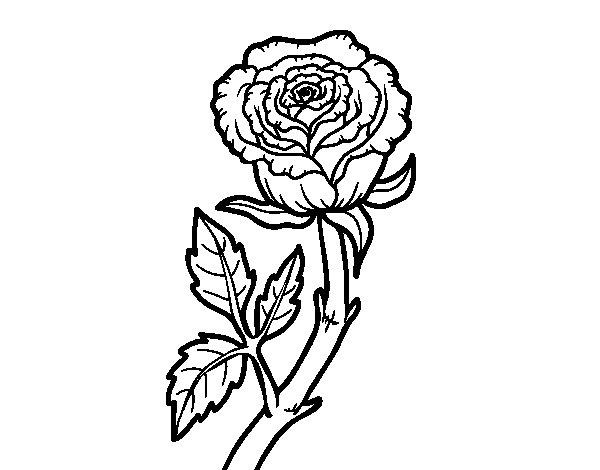Coloriage de Rose sauvage pour Colorier