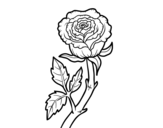 <span class='hidden-xs'>Coloriage de </span>Rose sauvage à colorier