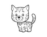 <span class='hidden-xs'>Coloriage de </span>Un chat domestique à colorier