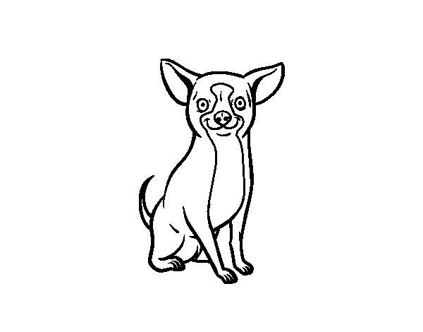 Coloriage de Un chien chihuahua pour Colorier