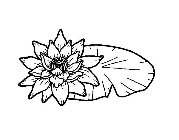 Coloriage de Une fleur de lotus pour Colorier