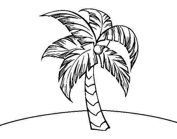 Coloriage de une palmier pour colorier - Dessin palmier ...