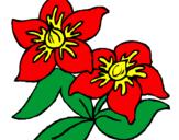 Coloriage Fleurs colorié par kahyna