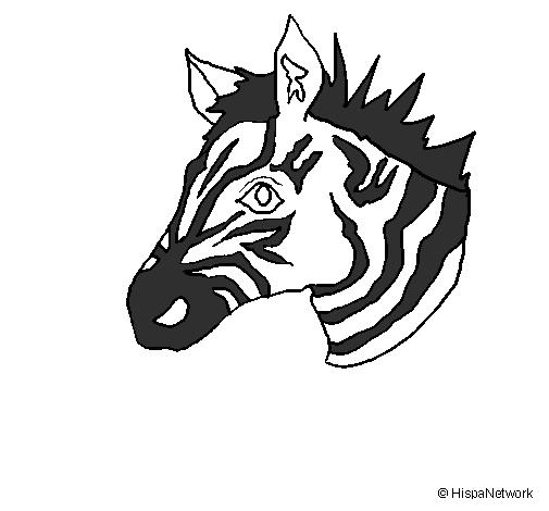 Dessin de z bre ii colorie par membre non inscrit le 05 de - Zebre a dessiner ...