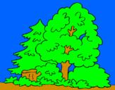 Coloriage Bois colorié par manuel