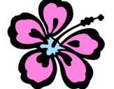 Coloriage Fleur hawaïenne colorié par MEV