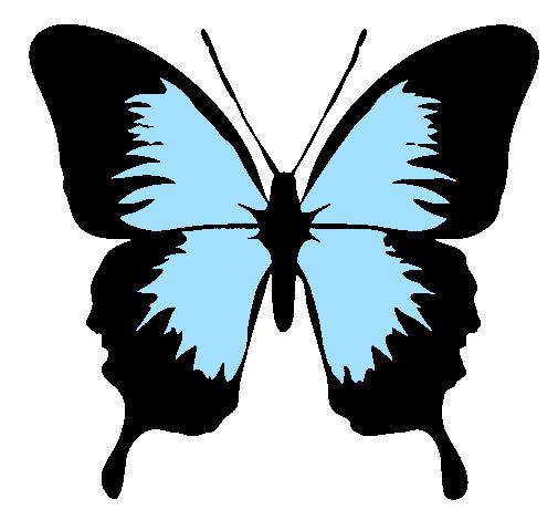 Aile De Papillon Dessin dessin de papillon à ailes noires colorie par membre non inscrit le