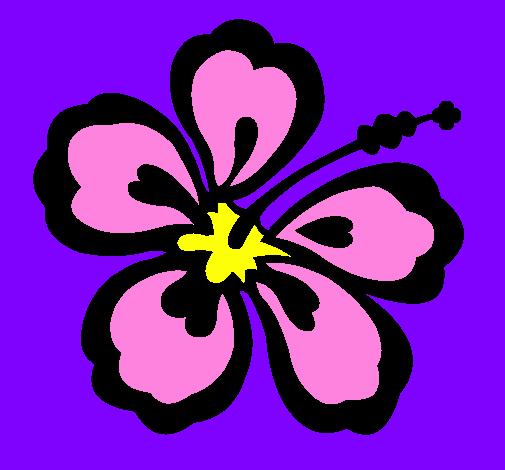 Dessin de fleur hawa enne colorie par membre non inscrit - Fleure hawaienne ...