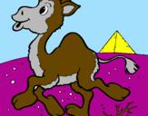 Coloriage Chameau colorié par chameux