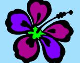 Coloriage Fleur hawaïenne colorié par keetye
