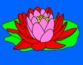 Coloriage Nymphaea colorié par nedjma