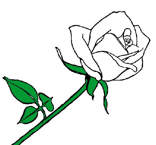 Dessin De Rose Colorie Par Membre Non Inscrit Le 23 De Avril De