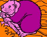 Coloriage Castor  colorié par JULES