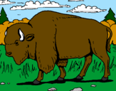 Coloriage Buffalo colorié par dylan